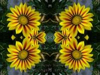 Daisies yellow kaleidoscope