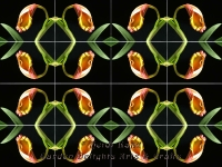Golden tang kaleidoscope