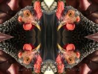 Hen and George kaleidoscope