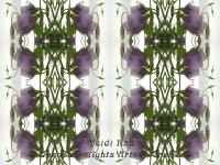 Lisianthus kaleidoscope