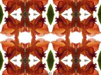 Orange laelia kaleidoscope