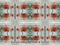 Phalaenopsis orchid kaleidoscope
