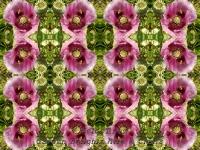 Poppy and bee kaleidoscope