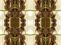 Ladyslipper geometric kaleidoscope
