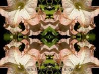 Angel's trumpets kaleidoscope