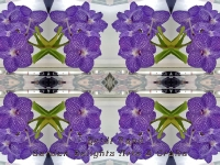 Vanda deco kaleidoscope