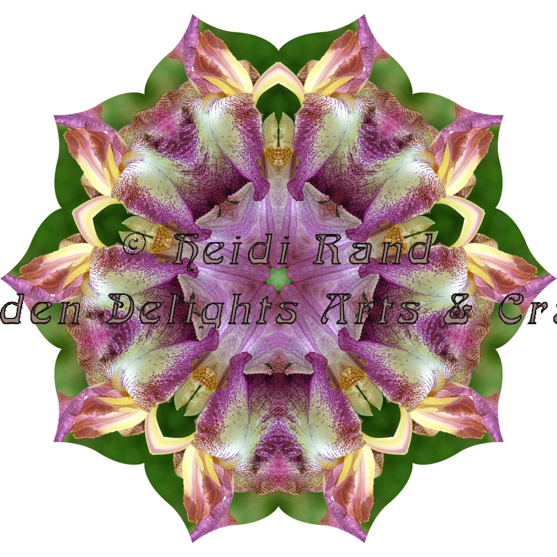 Bearded iris mandala