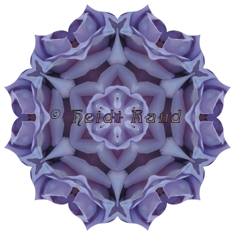 Blue girl rose mandala