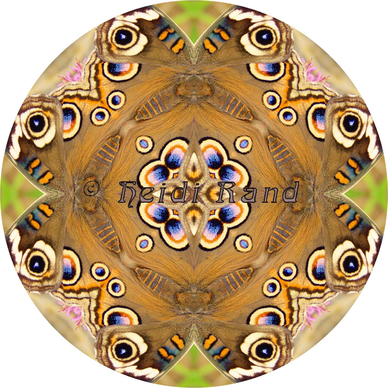 Buckeye butterfly mandala