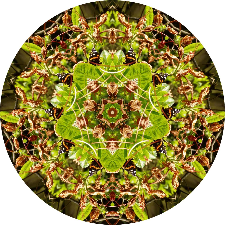 Butterfly on green mandala