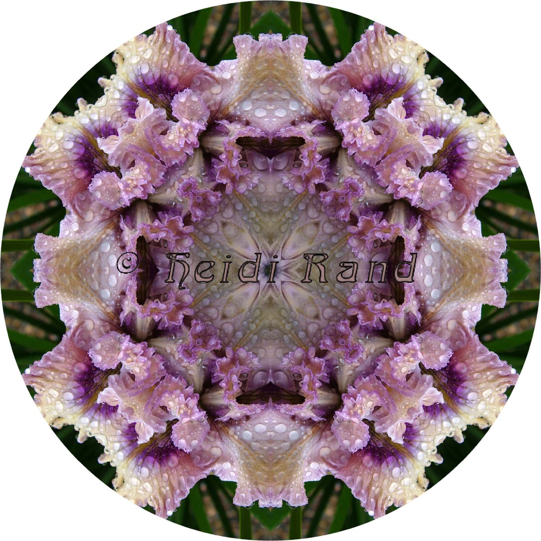 Pale iris with rain mandala