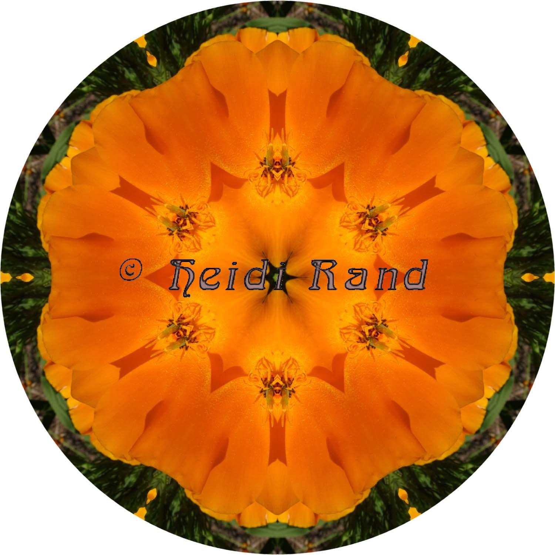 California poppy circle mandala