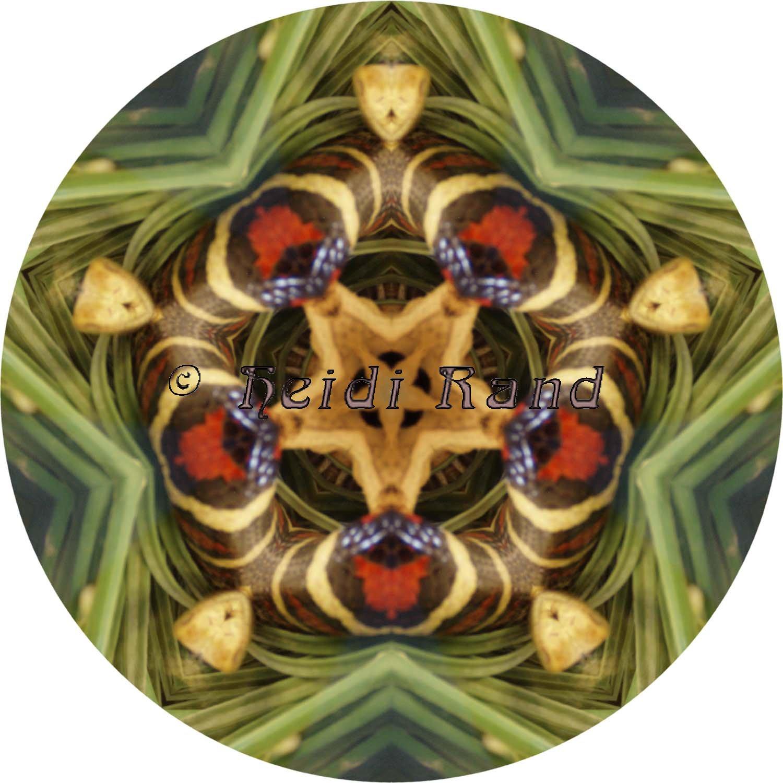 Snake red mandala