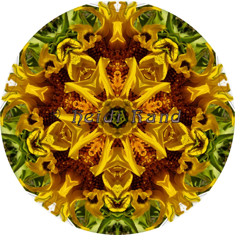 Sunflower circle mandala
