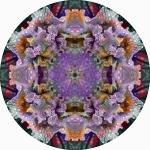 Black iris pale rainy iris mandala