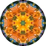 California white poppy collage mandala