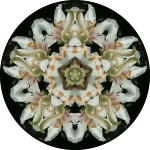 Flower with bee circle mandala