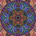 Iris and bromelliad collage mandala