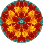 Plush daisies mandala