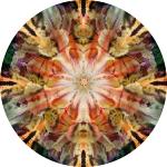 Sunset lacy iris collage mandala