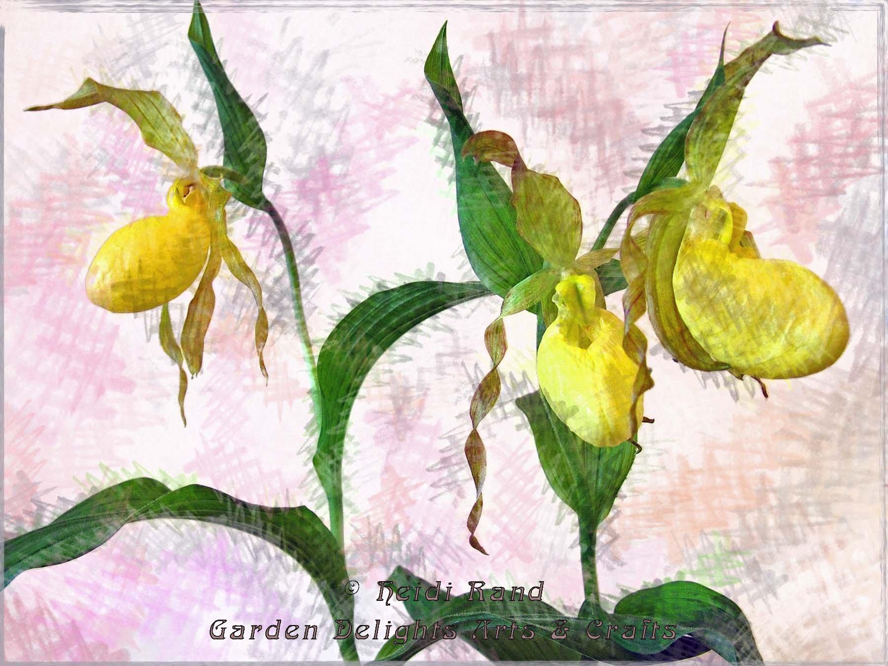 Yellow Ladyslipper Orchid