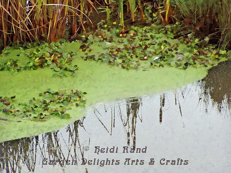 Pond reflecting