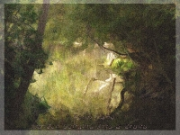 Jewel Lake Tilden Park