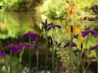 Lake Sonoma Horticultural Center