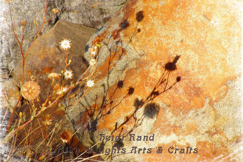Rock and dry flowers Tilden Park