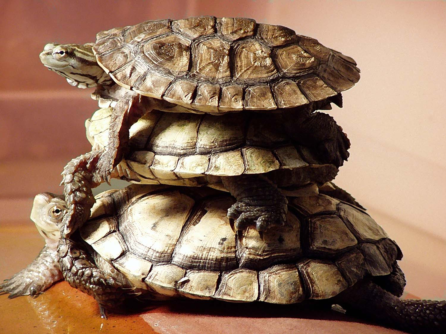 Turtles & tortoises | Garden Delights Arts & Crafts